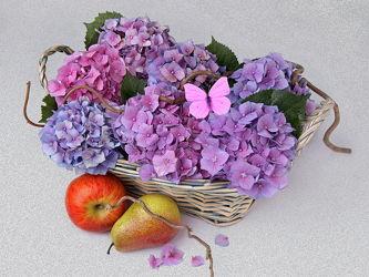 Bild mit Früchte, Blumen, Frucht, Obst, Birne, Apfel, Blumen und Blüten, Floral, hortensien, Blüten, Florales, blüte, Hortensie, Zweige