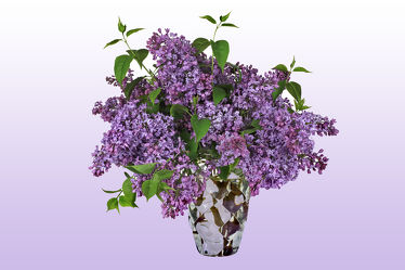 Bild mit Floral, Florales, flieder, Blumenvase, vase, kristallvase, blumem blumen