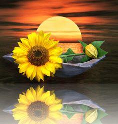Bild mit Wasser, Pflanzen, Himmel, Reflexion, Blumen, Sonne, boot, Blume, Pflanze, Sonnenblume, Spiegelung, Floral, Blüten, Florales, blüte