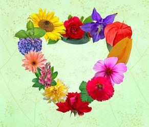 Bild mit Pflanzen, Blumen, Rosen, Sonnenblumen, Pflanze, Rose, Tulpe, Tulpen, romantik, Sonnenblume, blue, Margeriten, Margerite, Floral, Stilleben, Blüten, Florales, blüte, romantisch, Herz, Liebe, Akelei, lampions, lampion, paare, verliebte