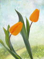 Bild mit Pflanzen, Blumen, Frühling, Blume, Pflanze, Tulpe, Tulpen, Park, Floral, Stilleben, Blüten, Florales, garten, blüte, dekorativ, Dekoration
