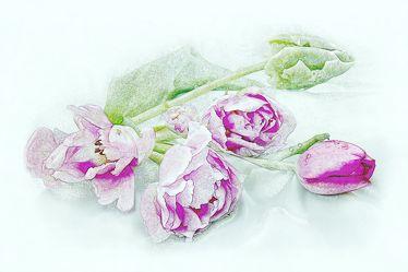 Bild mit Pflanzen, Blumen, Blume, Pflanze, Tulpe, Tulpen, Wassertropfen, Floral, Stilleben, Blüten, Florales, blüte, weinflasche
