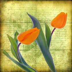 Bild mit Kunst, Pflanzen, Blumen, Blume, Pflanze, Tulpe, Tulpen, romantik, Floral, Stilleben, Florales, Textur, Nostalgie, romantisch, Liebe, Emotionen, Schreiben, nostalgisch, briefe, paare