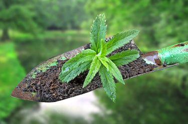Bild mit Wasser, Pflanzen, Bäume, Baum, Blätter, Pflanze, Blatt, Bach, Park, Stilleben, garten, Fluss, dekorativ, Dekoration, schüppe