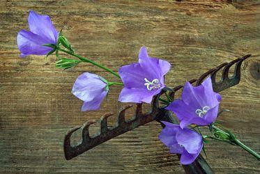 Bild mit Blumen, Holz, Blume, Pflanze, Pflanze, Park, Floral, Stilleben, Blüten, Florales, garten, blüte, dekorativ, Dekoration, Harke, harken