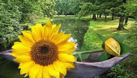 Bild mit Wasser, Pflanzen, Bäume, Gewässer, Blumen, Sonnenblumen, Sonne, Baum, Blume, Pflanze, Sonnenblume, Bach, Park, Floral, Stilleben, Blüten, Florales, garten, blüte, Fluss, sun, dekorativ, Dekoration