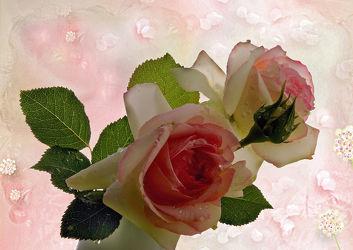 Bild mit Natur, Pflanzen, Blumen, Rosen, Blume, Pflanze, Rose, Floral, Stilleben, Blüten, Florales, Wellness, Textur, blüte, dekorativ, Dekoration, rosee