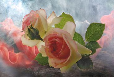 Bild mit Kunst, Pflanzen, Himmel, Wolken, Blumen, Rosen, Nebel, Blume, Pflanze, Rose, Floral, Blüten, Florales, Stilleben & Objekte, blüte