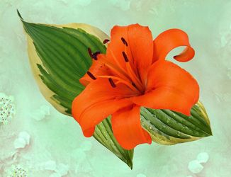 Bild mit Pflanzen, Blumen, Lilie, Lilien, Floral, Blüten, Florales, texture