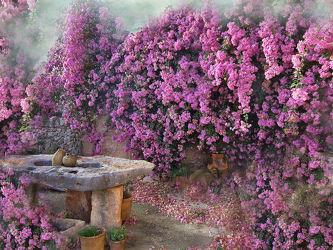Bild mit Blumen, Blätter, Blume, romantik, Blatt, Floral, Stilleben, Blüten, Florales, blüte, romantisch