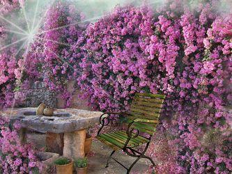 Bild mit Pflanzen, Blumen, Blume, Pflanze, Floral, Stilleben, Blüten, Florales, Sterne, blüte, stern