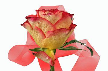 Bild mit Blumen, Rosen, Blätter, Blume, Rose, Blatt, Floral, Stilleben, Florales