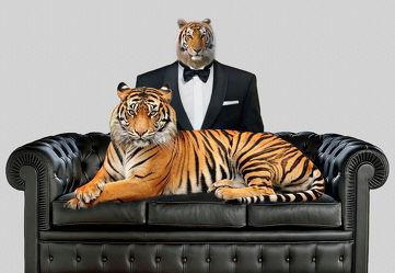 Bild mit Tiere, Tier, Abstrakt, Stilleben, lustig, Tiger, sofa, mann, männer, anzug, smoking, humor