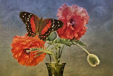 Bild mit Blumen, Mohn, Schmetterlinge, Blätter, Blume, Mohnblüte, Blatt, Floral, Stilleben, Blüten, Florales, Schmetterling, blüte, dekorativ, Dekoration, texture, mohnblüten