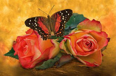 Bild mit Pflanzen, Wolken, Blumen, Rosen, Nebel, Schmetterlinge, Blätter, Blume, Pflanze, Rose, Blatt, Floral, Stilleben, Blüten, Florales, Schmetterling, blüte