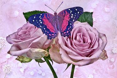 Bild mit Blumen, Rosen, Schmetterlinge, Blätter, Blume, Rose, Blatt, Floral, Blüten, Florales, Schmetterling, blüte, texture