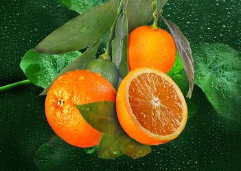 Bild mit Orange, Wasser, Früchte, Essen, Orangen, Blätter, Frucht, Obst, Küchenbild, Nahrung, Blatt, Wassertropfen, Food, Küchenbilder, frisch, Ernährung, Küche, Apfelsine, Apfelsinen