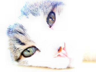 Bild mit Katzen