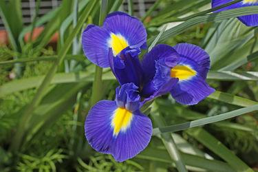 Bild mit liliengewächse