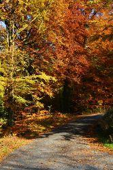 Bild mit Natur, Jahreszeiten, Wälder, Holz, Wege, Wald, Weg, Waldweg, waldwege