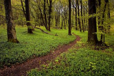 Bild mit Landschaften, Bäume, Wälder, Wege, Wald, Baum, Weg, Landschaft, Buchenwald, pfad, pfade