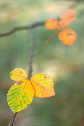 Bild mit Natur, Wälder, Herbst, Wald, Blätter, Blatt, Herbstblätter, Laub