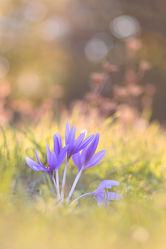 Bild mit Natur, Gräser, Blumen, Sonnenschein, Blume, Wildblumen, wildblume