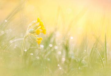 Bild mit Blumen, Sonne, Sonnenschein, Blume, Wiese, Feld, Felder, Wildblumen, blüte, Wiesen, wildblume