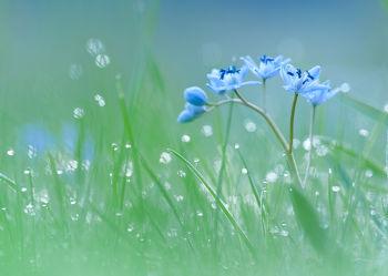 Bild mit Blumen, Sonne, Sonnenschein, Blume, Wiese, Feld, Felder, Wildblumen, blüte, Wiesen, wildblume, blausternchen