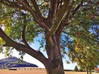 Baum des Lebens