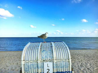 Möwe auf dem Strandkorb 2