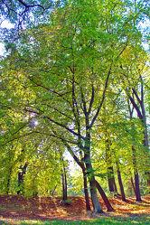 Bäume im Park 2