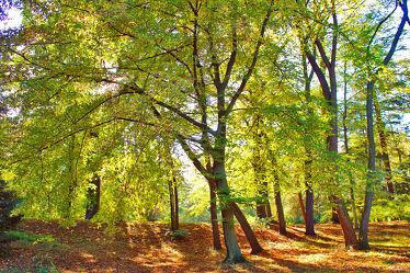 Bäume im Park