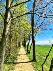 Bild mit Natur, Bäume, Frühling, Baum, Weg, Waldweg, Waldweg, Landschaft, Tree, Trees, Wanderweg