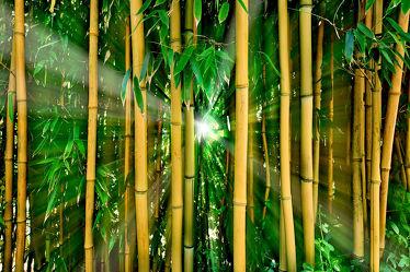 Bild mit Natur, Pflanzen, Bambus, bamboo, Wald, Gegenlicht, bambuswald, mystisch, Urwald, bambusstangen, bambusrohr, Regenwald, Bambusmotiv, bambuspflanze, Bambusblatt, Bambusblätter