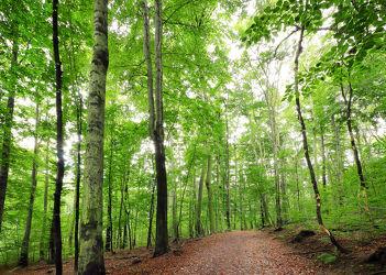 Bild mit Natur, Bäume, Wälder, Laubbäume, Wald, Lichtung, Baum, Waldlichtung, Weg, Waldweg, Landschaft, Forest, Laubbaum, Landeskrone