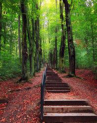 Bild mit Natur, Bäume, Wälder, Laubbäume, Wald, Baum, Weg, Waldweg, Landschaft, Forest, Laubbaum, Görlitz, Landeskrone, treppe, Aufstieg, Treppenstufen