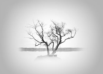 Bild mit Kunst, Natur, Baum, Landschaft, Scharmützelsee, Entspannung, art, Black and White, schwarz weiß, mystisch, Minimalismus, minimal art, minimalart
