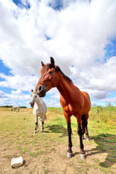 Bild mit Tiere, Pferde, Tier, Kinderbild, Kinderbilder, Pferd, reiten, Pferdeportrait, Pferdekoppel, Horse, Pferdeliebe, pferdebilder, pferdebild