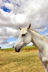 Bild mit Tiere, Pferde, Tier, Kinderbild, Kinderbilder, Pferd, reiten, Pferdekopf, Pferdeportrait, Horse, Pferdeliebe, pferdebilder, pferdebild