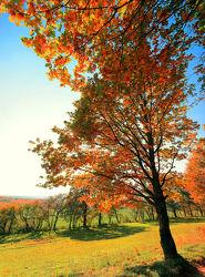 Bild mit Natur, Herbst, Baum, Eiche, Landschaft, Laubbaum, Jahreszeit, autumn