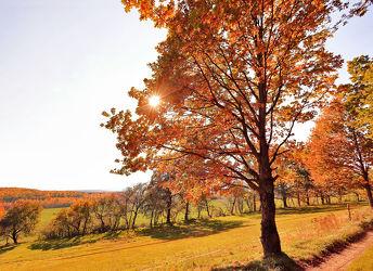 Bild mit Natur, Herbst, Baum, Weg, Eiche, Landschaft, Laubbaum, Feldweg, Jahreszeit, autumn