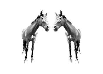 Pferde Minimal-Art