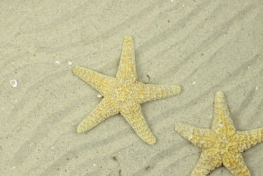 Zwei Seesterne am Sandstrand.
