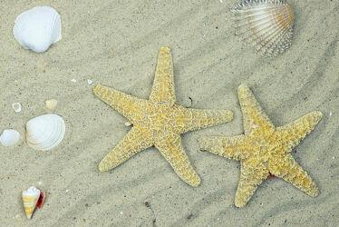 Muscheln und Seesterne am Sandstrand.