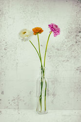 Bild mit Blumen, Blume, Pflanze, Makro, Stillleben, Ranunkeln, VINTAGE, blüte, Hahnenfuß, Ranunkel, Ranunculus asiaticus, old style