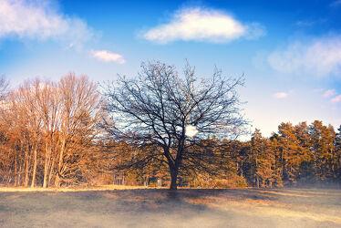 Bild mit Natur, Nebel, Wald, Lichtung, Baum, Landschaft, mystisch