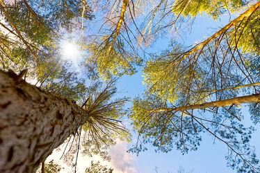 Bild mit Natur, Bäume, Nadelbäume, Wald, Baumkrone, Baum, Nadelbaum, Forest, Baumkronen