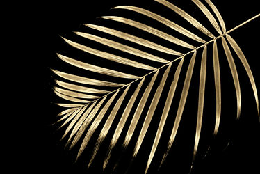 Bild mit Palme, Blume, Pflanze, Blatt, Blattstruktur, palmwedel, Palmenblatt, Dypsis Lutescens, Chrysalidocarpus lutescens, Arecaceae