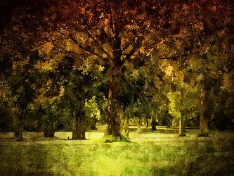 Bild mit Natur, Landschaften, Sommer, Landschaft, Ruhe, Entspannung, Park, Design, Stille